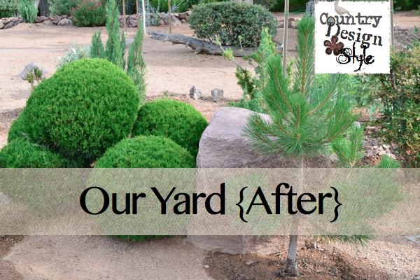 Our Yard After