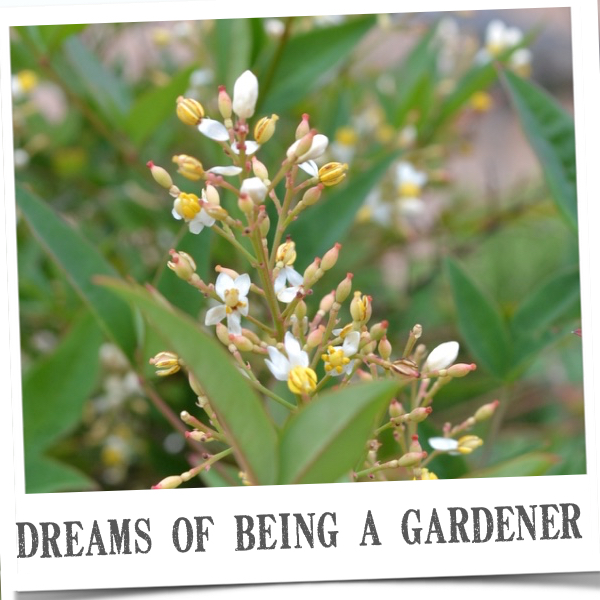dreams-of-being-a-gardener-country-design-style-fpol