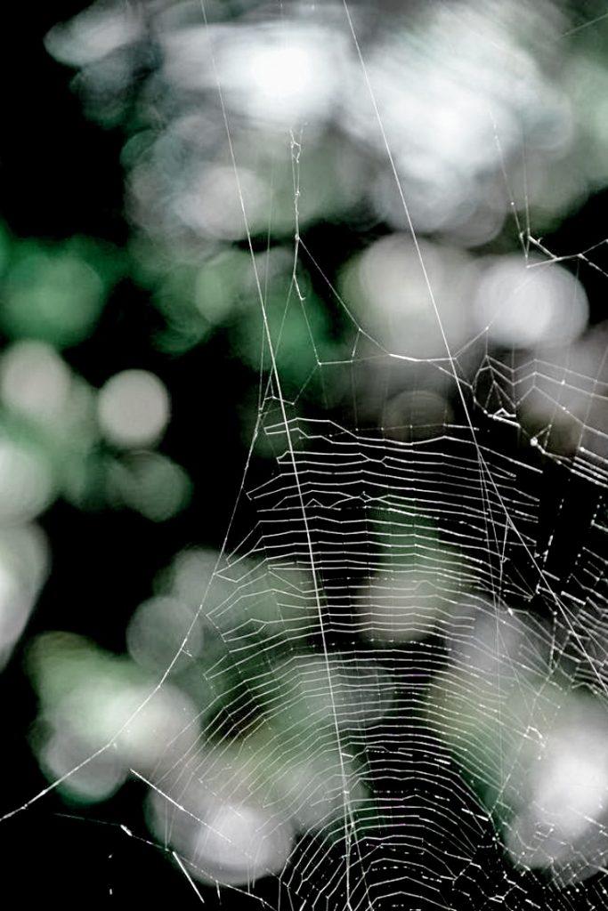 spiderweb on greens