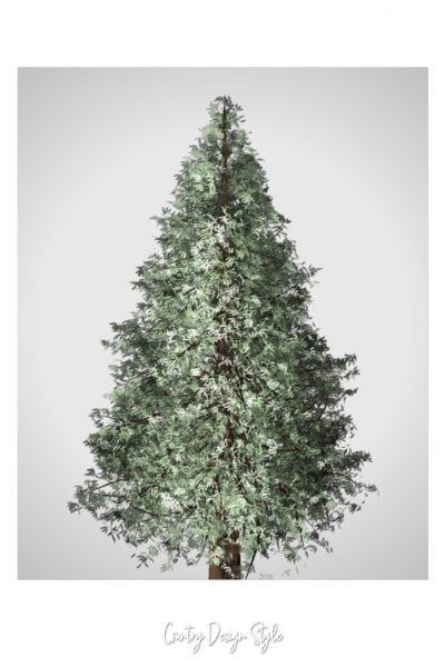Pine Tree Picture Printable