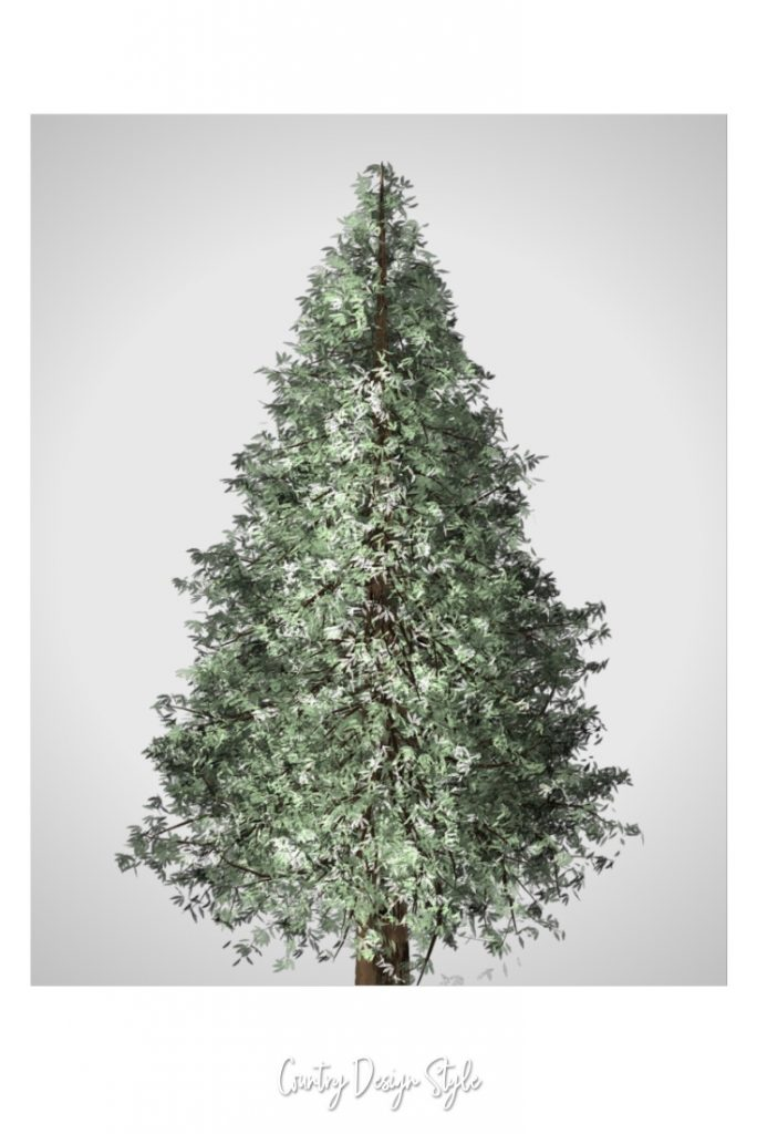 Pine Tree Picture Printable soft