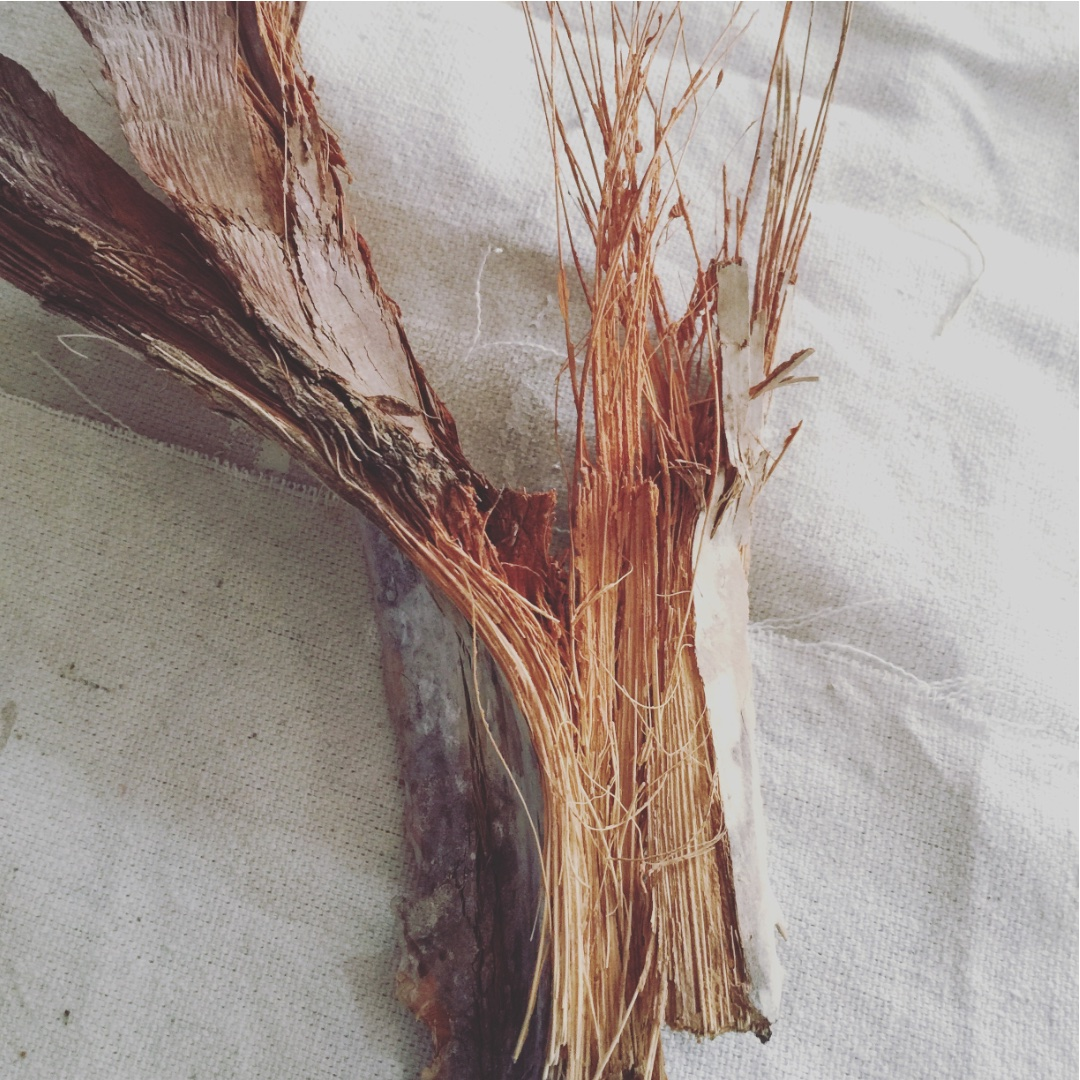 palm petiole