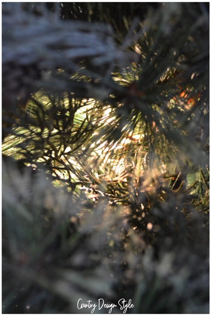 Upcycle Tree glow