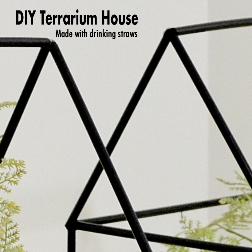 DIY Terrariums SQ