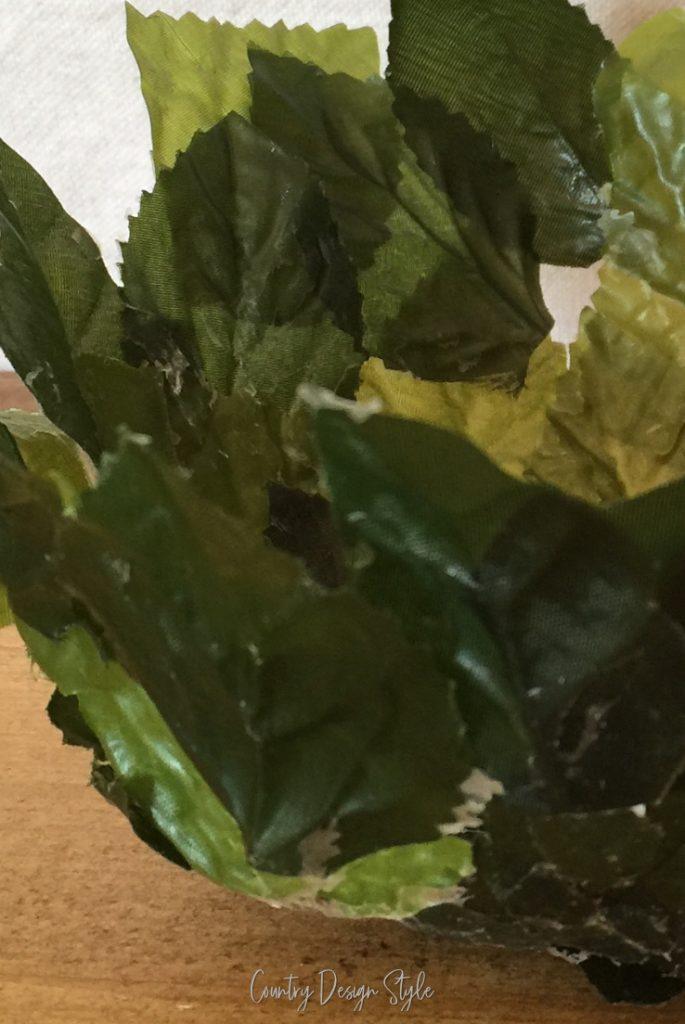 looks like wilted lettuce