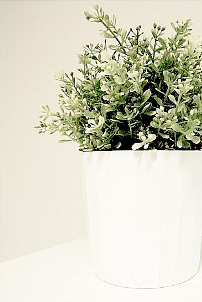 green plant in whtie vase
