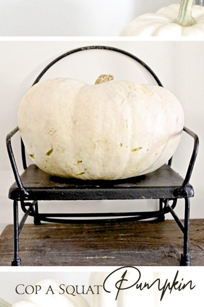 White pumpkin sitting in black chair