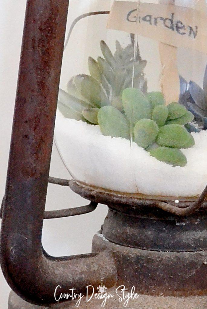 closeups of succulents in lantern