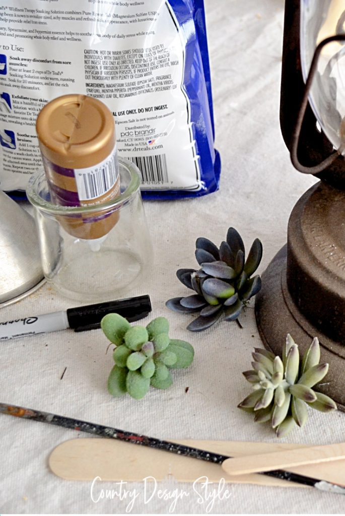 succulents for garden