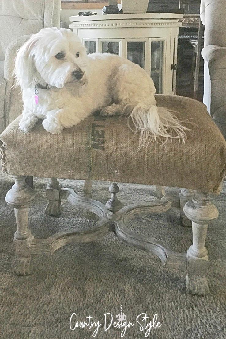 our dog emily on ottoman